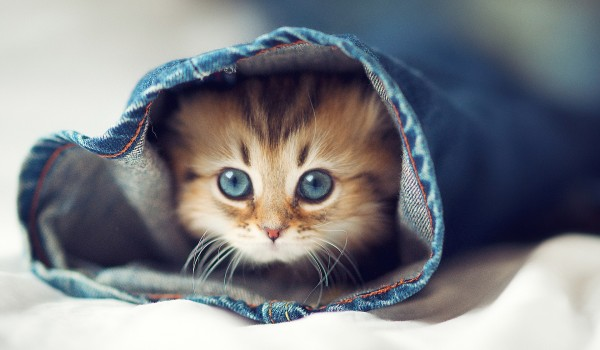 cute-cat-kitten-jeans-the-bed-wallpaper-1920x1200
